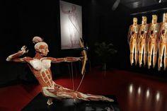 Museus estranhos pelo mundo - Plastinarium – Guben, Alemanha