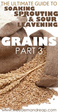 The Ultimate Guide to Soaking, Sprouting, & Sour Leavening Grains - Part 3 - Weed 'em & Reap Nourishing Traditions, Flour Recipes, Sourdough Recipes, Ham Recipes, Vegetable Recipes, Bread Recipes, Baking Recipes, Healthy Grains, Grain Foods