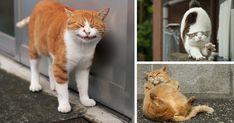 Con sus fotos, el fotógrafo japonés Masayuki Oki capta la personalidad individual de los gatos callejeros de Tokyo.