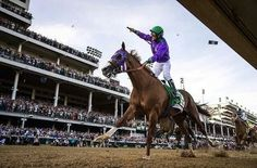 California Chrome.  2014 Kentucky Derby.
