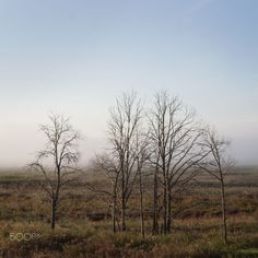 Осеннее утро / 500px