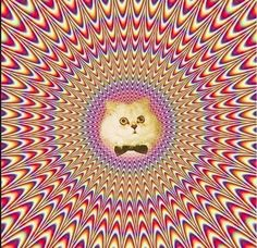 dizzycat #cat