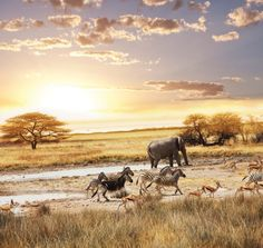 Captivating Coast to Captivating Kruger - 4 day Package holiday  http://www.africanwelcome.com/tours-and-safaris-south-africa-botswana-namibia-vicfalls/package-holidays-and-tours/coast-to-kruger-4-night-package-holiday