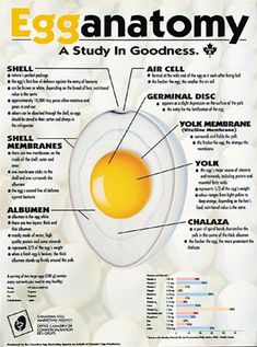 Whole Egg Nutrition Facts | Whole egg nutrition, Nutrition and Eggs