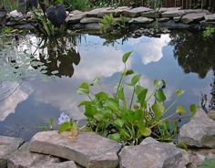 15 Unique Water Gardens from HGTV