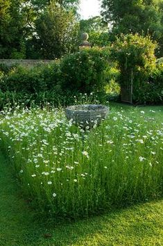 Wollerton Old Hall, Shropshire: The Font Garden with meadow planting of daisies (Leucanthemum vulgare).  Photo by Clive Nichols