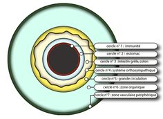 IRIDOLOGY..........DIAGNOSTIQUE.......BING IMAGES........
