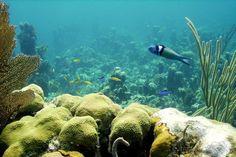 Andros Bahamas Marine Life