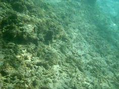 Snorkeling en Playa Cristal - Santa Marta