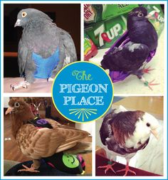 Pigeon Products - bird diapers to let birds out of cage