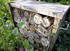 Quels auxiliaires habitent votre jardin et comment mieux les accueillir ? Les conseils de Rustica pour un jardin respectueux de la biodiversité et bien vivant !