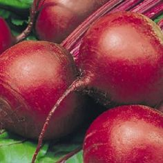 Detroit Dark Red Beet - High Mowing Organic Seeds - Heirloom Seed