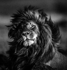 Jurado español para Cannes Lions