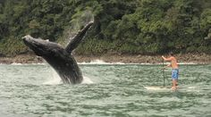 One of my favorite SUP pictures ever!  A whale says hello in Columbia.