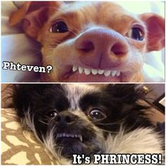 Phteven has a girlfriend! Funny Dog Memes, Funny Dogs, Cute Dogs, Super Funny, Funny Cute, Hilarious, Funny Animal Pictures, Funny Animals, Cute Animals