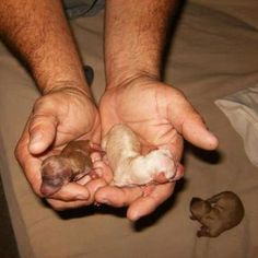 Newborn doxie puppies!!!