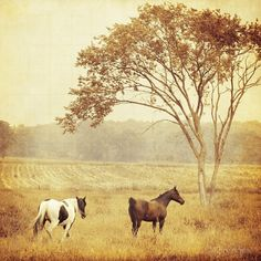 Restless ~ photographer Emiko Franzen #photography #landscape #horses #pasture #summer #myt