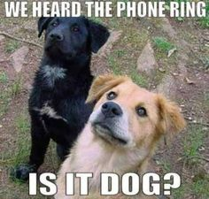 Is It Dog    http://funnymemes.site/is-it-dog/