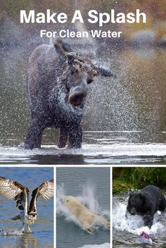 How We Can Make a Splash for Wildlife and Protect Clean Water United Nations Environment Programme, Water Scarcity, Water And Sanitation, Citizen Science, Animal Species, Splish Splash, Together We Can, Science Projects, Forgive