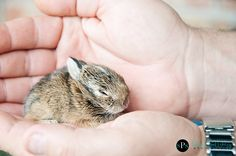 Little baby bunny rabbits are such a part of spring and Easter. What an adorable little one!