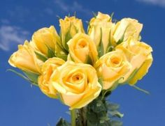 Looking for nice looking Yellow Roses? GlobalRose specializes in provide Yellow Roses in large quantities with Free Delivery and Guaranteed Freshness! Hot Pink Roses, Ivory Roses, Orange Roses, White Roses, All Flowers, Exotic Flowers, Fresh Flowers, Send Roses, Wholesale Roses