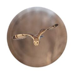 Short-eared owl diving towards the ground paper plate - animal gift ideas animals and pets diy customize