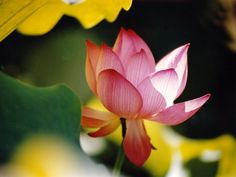 You clothe the lily with beauty
