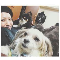 この日ほど犬と人間のテンションの差が激しいのはめずらしい。 #mosh #もっしゅ #モッシュ 😭 😭 😭  #犬#いぬ#いぬバカ部#いぬすたぐらむ#犬のいる暮らし#親バカ#親バカ部#マルチーズ#シーズー#mix犬#ミックス犬 #雑種#わんこ#愛犬#dog#doglover#doglife#lovedog#maltese#shihtzu#dogstagram#instadog#dogdays#chihuahua#ちわわ#チワワ#ロングコートチワワ
