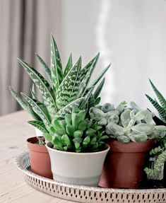Ornamental plants in the house is a dried plant used for ornamental plants that are often placed in the room. Like mini cactus plants that are generally mini-sized commonly planted on pot media. Growing Succulents, Cacti And Succulents, Planting Succulents, Planting Flowers, Succulent Ideas, Mini Cactus Plants, Cactus Flower, Potted Plants, Green It