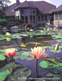 20 Pond Ideas Pond Ponds Backyard Koi Pond