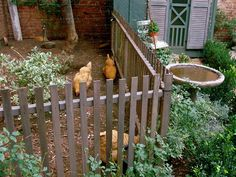 Urban Chicks. I like the fence within the backyard fence for a safe place to keep your chickens.