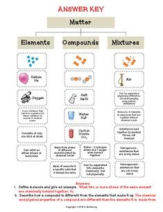 mitosis worksheet Cells, Photosynthesis, Mitosis