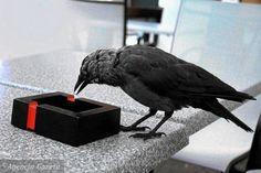Zdjęcie numer 4 w galerii - Jak zostać miejskim ornitologiem. Za oknem ptaków jest więcej niż w puszczy