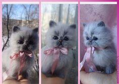 Купить ТОТТИ - котенок из шерсти, валяный котенок, игрушка ручной работы, игрушка по фото