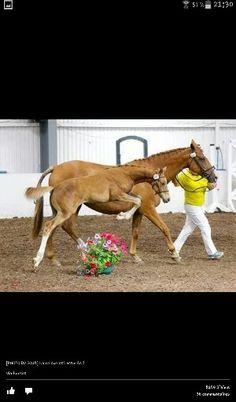 Le monde l'equitation
