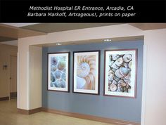 Barbara Markoff selected a series of my shell pictures printed on paper for the entrance to this emergency room in Arcadia. Barbara is an art consultant based in Southern California. Fine Art Photography, Nature Photography, Wall Murals, Wall Art, Healthcare Design, Print Pictures, Southern California, Art Blog, Entrance