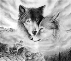 siyah beyaz 2 kurt resmi ile ilgili görsel sonucu