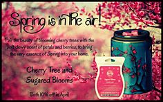 #TrendingTuesday features this #charmingduo available for 10% Off ;) Capture the #beauty of a blooming #cherrytree with the #scent of #petals and #berries to bring the #essenceofspring to your #home! https://lbates.scentsy.us/Scentsy/Buy/Category/1264 #Scentsy #ILoveWickless #MonthlySpecials