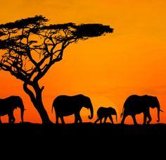 Tanzanie | Boiteavoyages.com