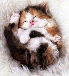 Cute kittens: The latest and cutest kitty videos are here for you. Cute kittens: The latest and cutest kitty videos are here for you. Cute Cats And Kittens, I Love Cats, Crazy Cats, Adorable Kittens, Fluffy Kittens, Kittens Playing, Persian Kittens, Ragdoll Kittens, Tabby Cats
