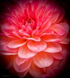 'Peaches and Creme,' - Hillsboro, Oregon.copyrights belong to photographer: Louise Edwards