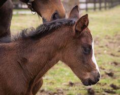 Foals - 3 9 2016 6