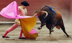 Madrid protects bullfighting as an art form | World news | The Observer