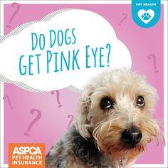 pink eye treatment on pinterest pink eyes makeup gift