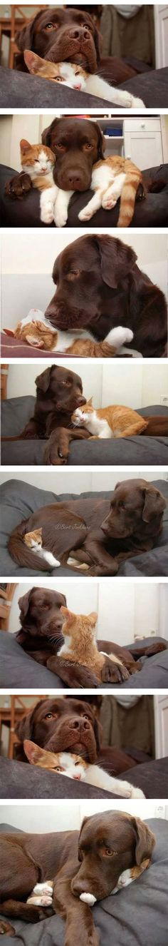 Very cute cat and dog! Come visit our blog to read about dogs and cats. Unlikely animal friends.  http://wolfies.place/wolfies-blog/