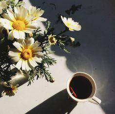 morning tea //