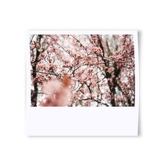 Polaroid Photo Effect ❤ liked on Polyvore featuring photography