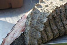 Tried Alligator meat. Yummy burgers in NOLA!