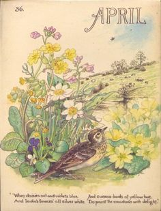 "April - from ""Country Diary of an Edwardian Lady"" by Edith Holden"