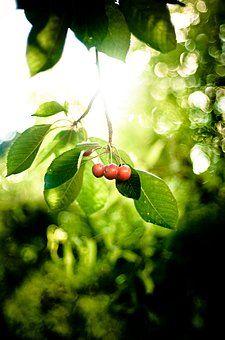 Photocase - 'Als die Kirschen reiften' ein Foto von 'kemai'